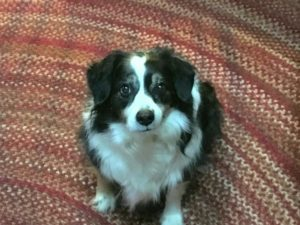 Lee Gillete's dog, Bella