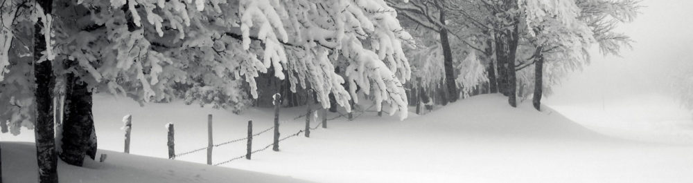 hd,wallpapers,snow,trees,white,christmas,wallpaper