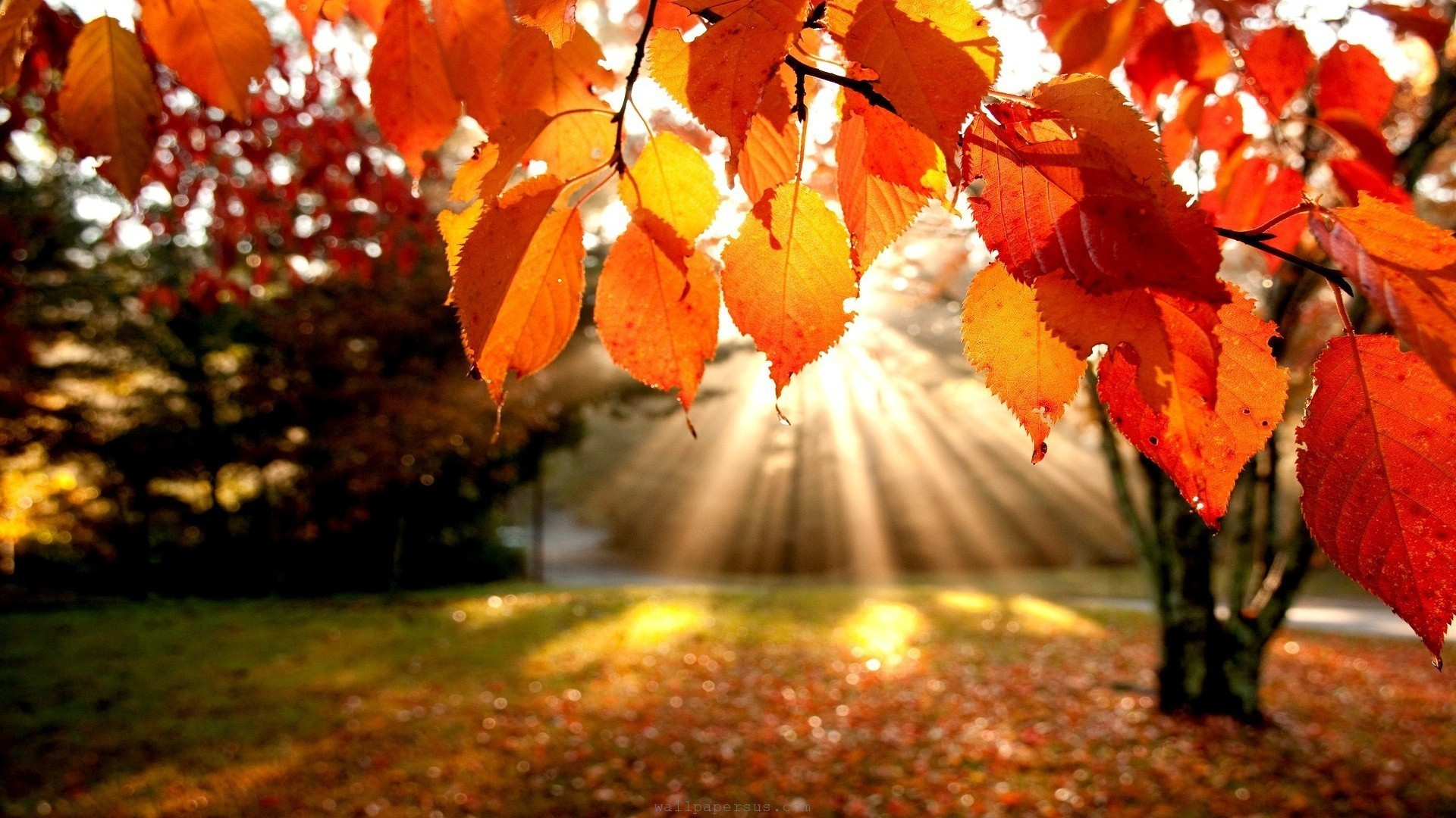 Trees Autumn Leaves Fall Sunlight Landscapes Nature Vincent